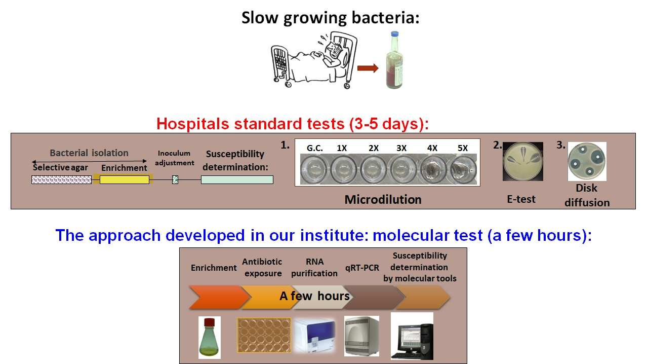 Rapid antibiotics susceptibility test using moleculars biomarkers